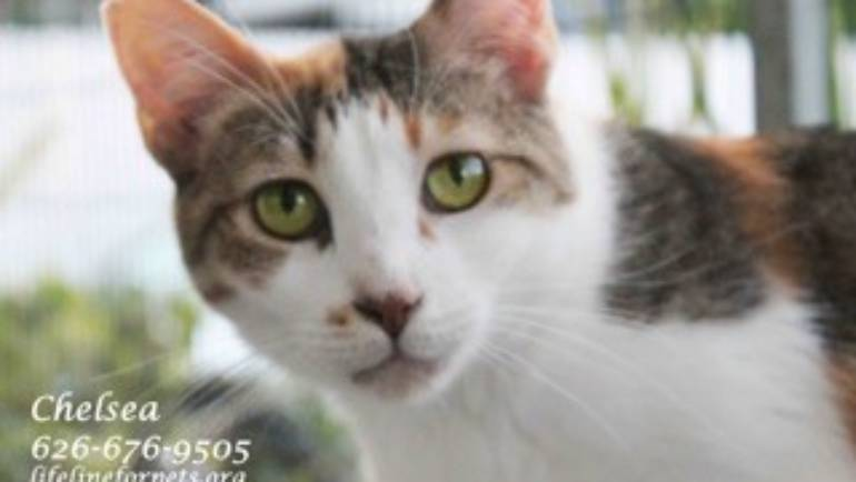 Lifeline for Pets: Cat of the Week