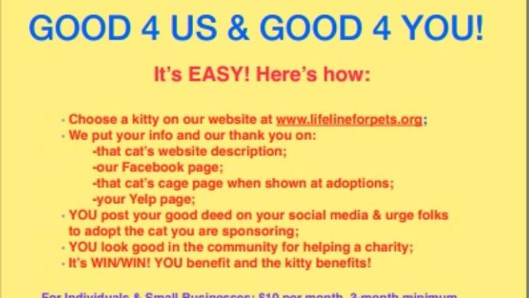 Sponsor a kitty at Lifeline for Pets