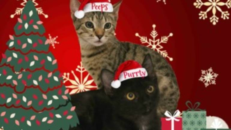 Lifeline for Pets: Cats of the Week