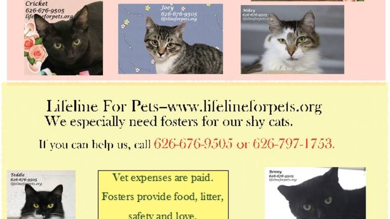 Foster Homes needed at Lifeline for Pets!