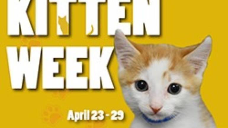 Updates from Pasadena Humane Society