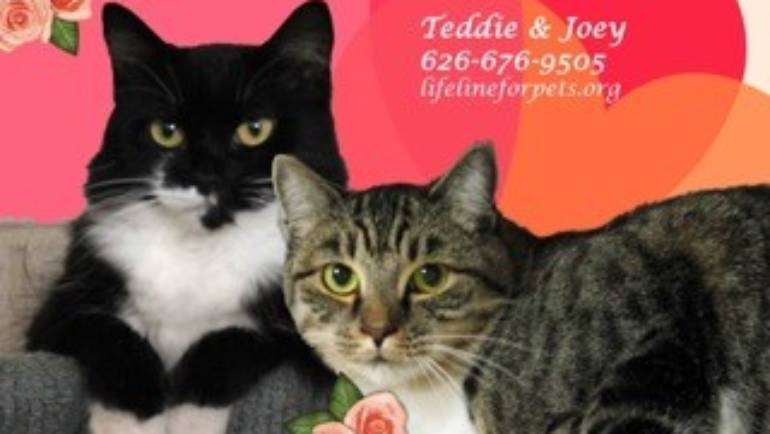Lifeline for Pets: Teddie and Joey