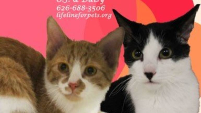 Lifeline for Pets – Cats of the Week