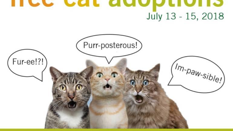 Free Cat Adoptions at Pasadena Humane Society