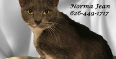 Lifeline for Pets – Cat of the Week