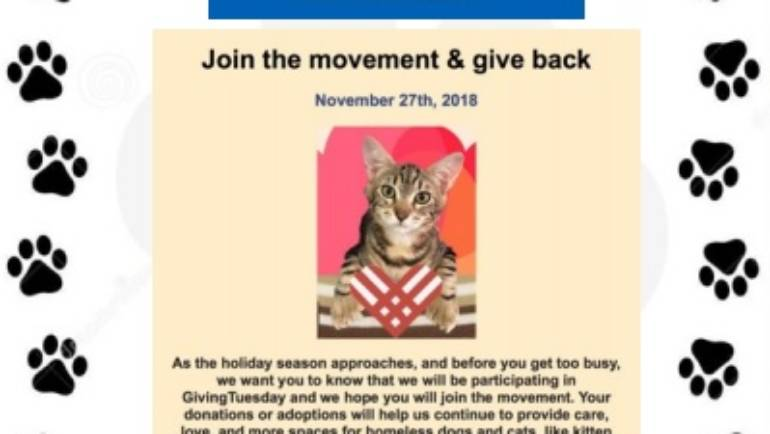 Join the Movement and Give Back with Lifeline for Pets