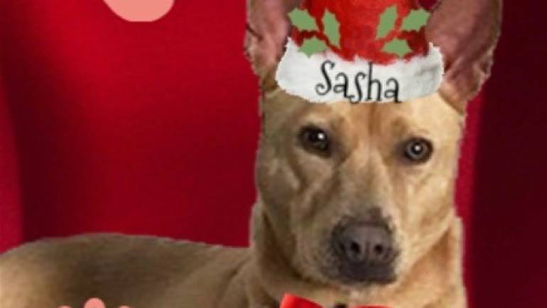 Lifeline for Pets: Dog of the Week