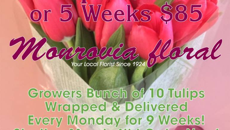 Get 9 Weeks of Tulips from Monrovia Floral